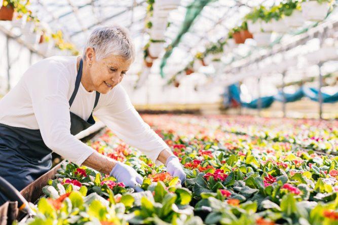 Les salariés qui travaillent à la retraite en forte hausse - AGIPI